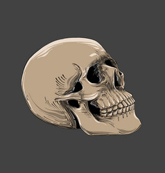 Hand drawn sketch of skull in color isolated on vector