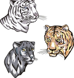 Heads of panther and tiger vector