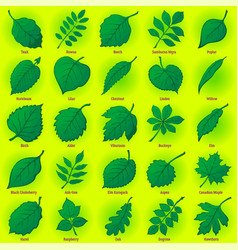 Leaves of plants set vector