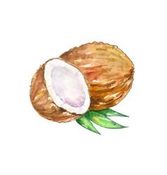 Watercolor brown coconut with a half vector