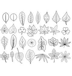 Line leaves vector