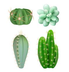 cactuses plants decorative realistic succulent vector image