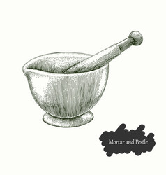 mortar and pestle hand drawing engraving style vector image