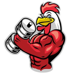 muscle rooster holding barbell vector image