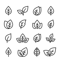 natural set black leaf line icons logo vector image