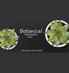 Succulents botanical card realistic green vector