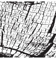 Texture Skin vector image