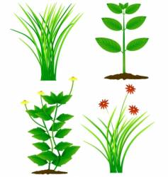grass and plants vector image vector image