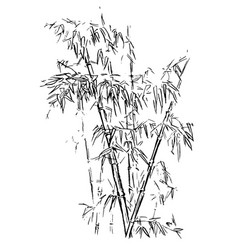 chinese traditional bamboo branches isolated on vector image