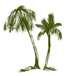 Palm collection cartoon hand drawn vector
