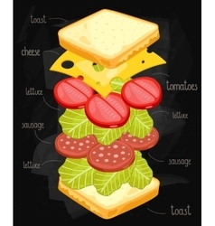 sandwich ingredients on chalkboard vector image