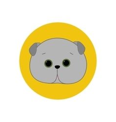Scottish Fold Cat vector
