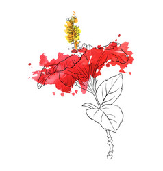 flower of hibiscus vector image