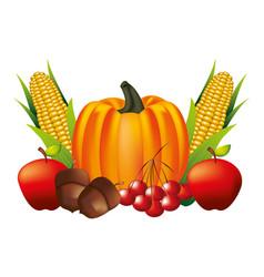pumpkin corn apple acorn and cherries vector image