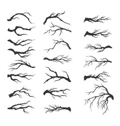 set dry tree branches vector image