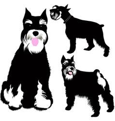 Set miniature schnauzer dogs vector