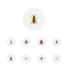 set of bug realistic symbols with sting housefly vector image