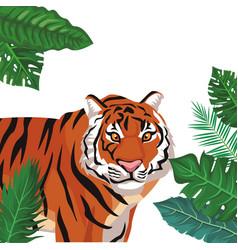 Wild tiger cartoon vector