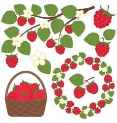 Raspberry Set vector image