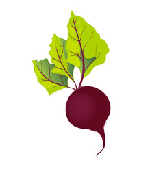 beet with leaf isolated vector image