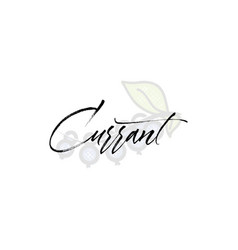 currant word on background fruit web vector image