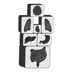internal organs cubes set vector image