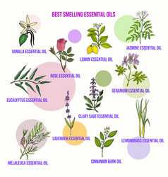 Best smelling essential oils vector