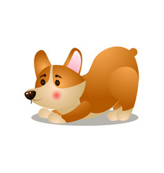 Cute happy corgi dog make morning exercise vector