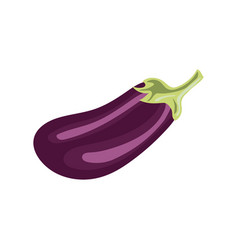 Eggplant isolated on white clipping path vector