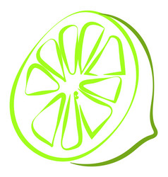 green lime drawing on white background vector image