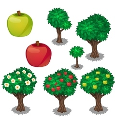Planting and cultivation of green and red apple vector