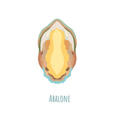 Single and symmetrical abalone seashell in section vector