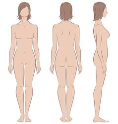 Woman figure vector image vector image