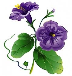 petunia flower vector image