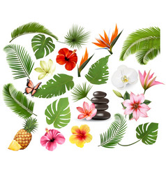 big collection exotic and tropical leaves vector image