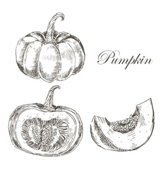 Pumpkin hand drawn ink and pencil drawing vector