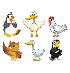 Six different kinds of birds vector image