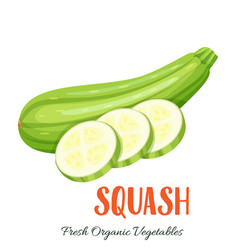 Squash vegetable vector