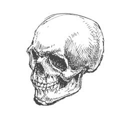 Cartoon Skull Hand drawn Eps8 vector image