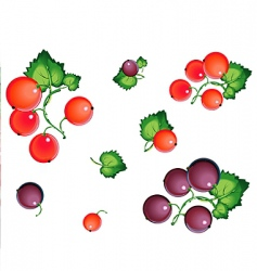 currants vector image