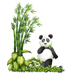A panda eating vector image