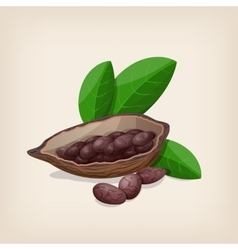 Cacao pods and beans with leaves vector