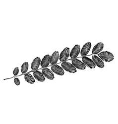 Decorative acacia leaf vector