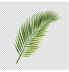 Palm leaf isolated transparent background vector
