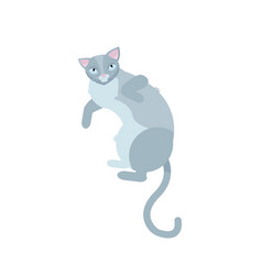 single gray cats lying on white background pretty vector image