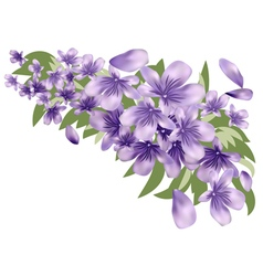 Lavender with leaves vector image