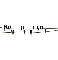 swallows on wires vector image
