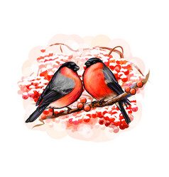 a pair beautiful winter birds bullfinches on vector image