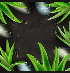 Aloe vera and zen stones spa frame template vector