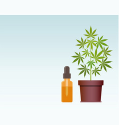 Marijuana plant and dropper with cbd oil cannabis vector